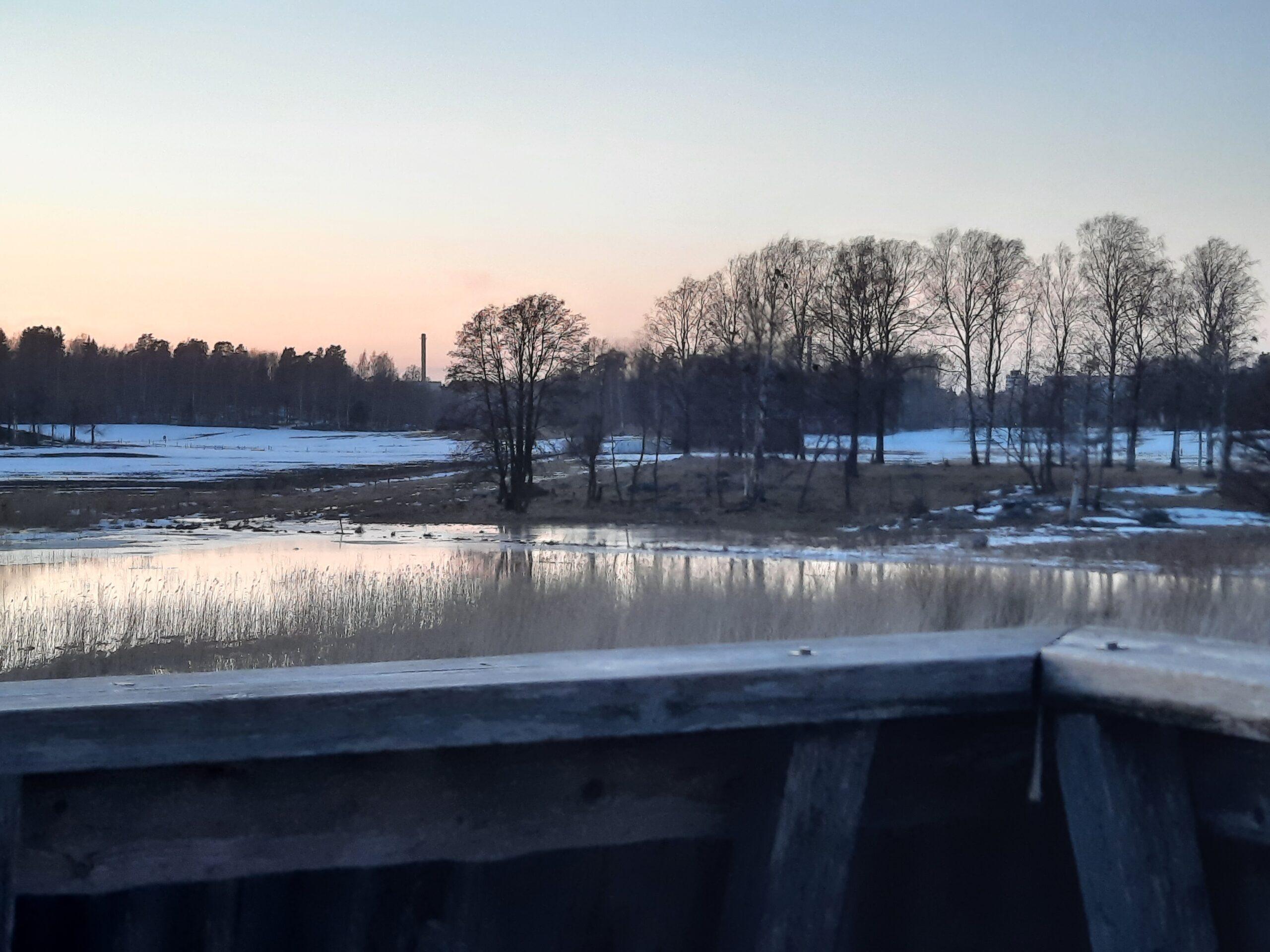 Kuva lintulavalta. Näkyy puita, kosteikkoa, lunta ja etualalla lintulavan seinämä.